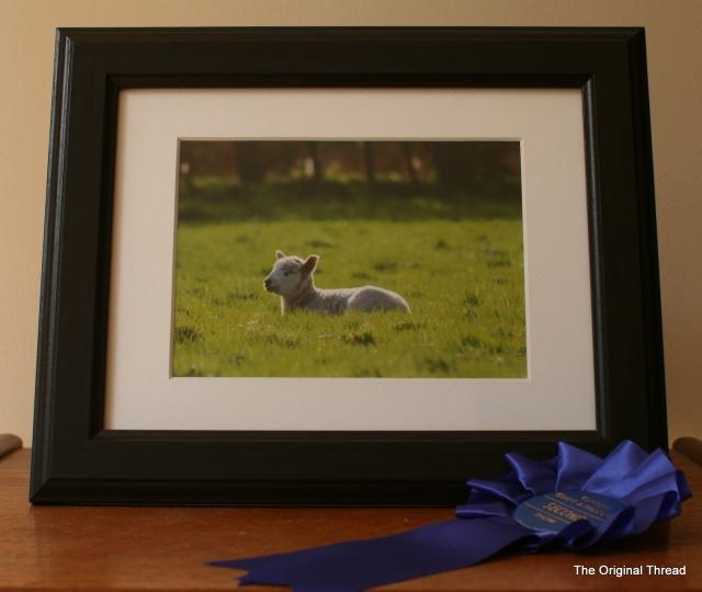 Farming - Lamb