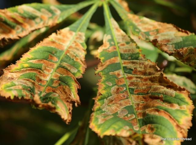 leaves angled