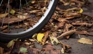 spokes and leaves (1 of 1)