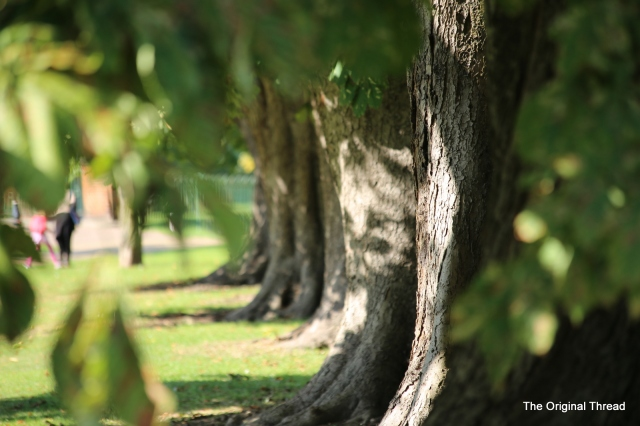 treeline1